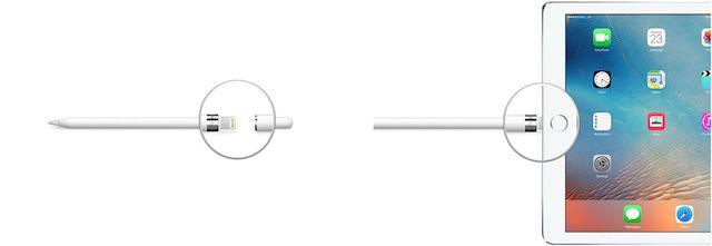 Apple Kalem iPad'e takılı.